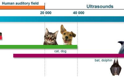 哪些動物有著絕佳的聽力?